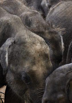 Amanwella Sri Lanka - Wildtier-Safaris