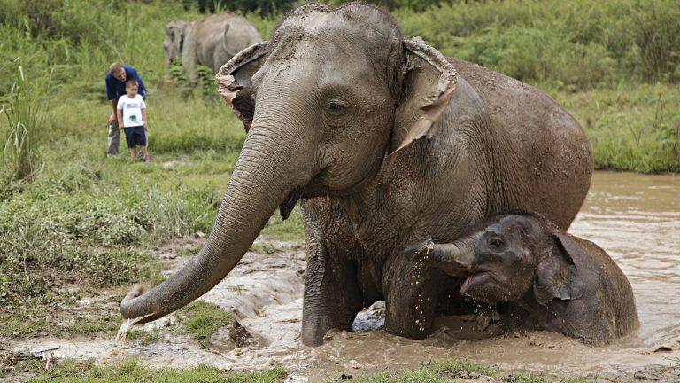 Anantara Golden Triangle Elephant Camp – Elefanten beobachten