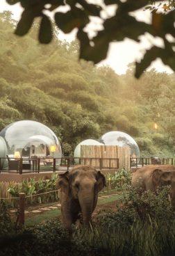 Anantara Golden Triangle Elephant Camp – Jungle Bubbles