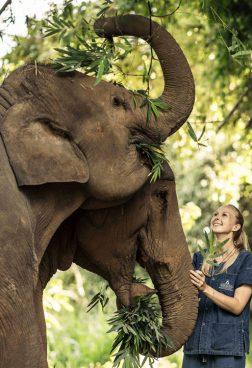 Anantara Golden Triangle Elephant Camp – Elefanten Erlebnisse