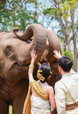 Anantara Golden Triangle Elephant Camp – Elefanten-Hochzeitszeremonie