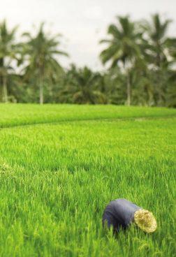 Belmond Jimbaran Puri - Bali Ost oder West
