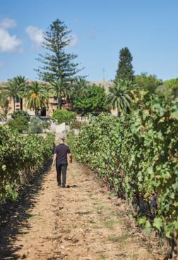 Belmond La Residenca 1 - In Harmonie mit Wein