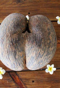 Coco de Mer Nuss