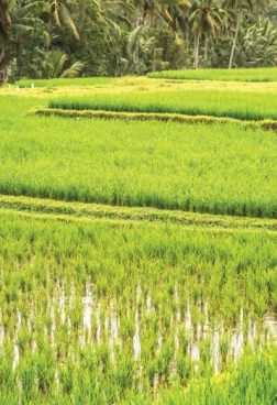 Four Seasons Bali at Sayan - Geheimnis-Wahrer