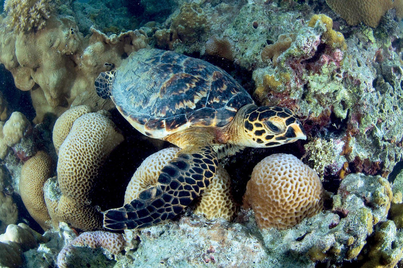 Four Seasons Resort Seychelles at Desroches Island – Tauchen & Schnorcheln
