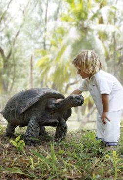 Four Seasons Resort Desroches Island - Schildkrötenschutzgebiet