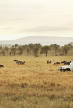 Four Seasons Safari Lodge Serengeti 3 - Serengeti entdecken