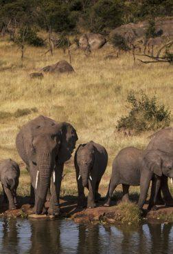 Four Seasons Safari Lodge Serengeti 4 - Professionelle Wildlife-Fotografie