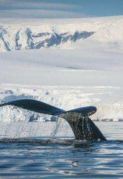 Hanseatic Inspiration R6 - Antarktis - Große Expeditionsroute intensiv mit Südpolarkreis