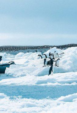 Hanseatic Nature R8 - Antarktis - Große Expeditionsroute mit Kap Hoorn