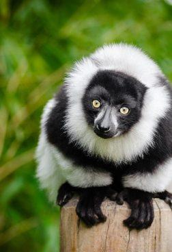 Hanseatic Spirit R2 - Expedition Madagaskar
