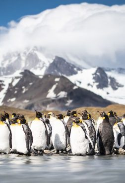 Hanseatic Spirit R6 - Antarktis - Große Expeditionsroute