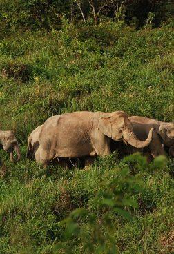 Evason Hua Hin – Kuiburi National Park