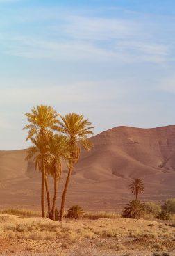 Rundreise Marokko: Landschaftsbild Marokko