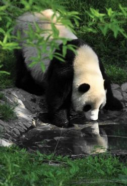 Six Senses Qing Cheng Mountain 4 - Panda Valley