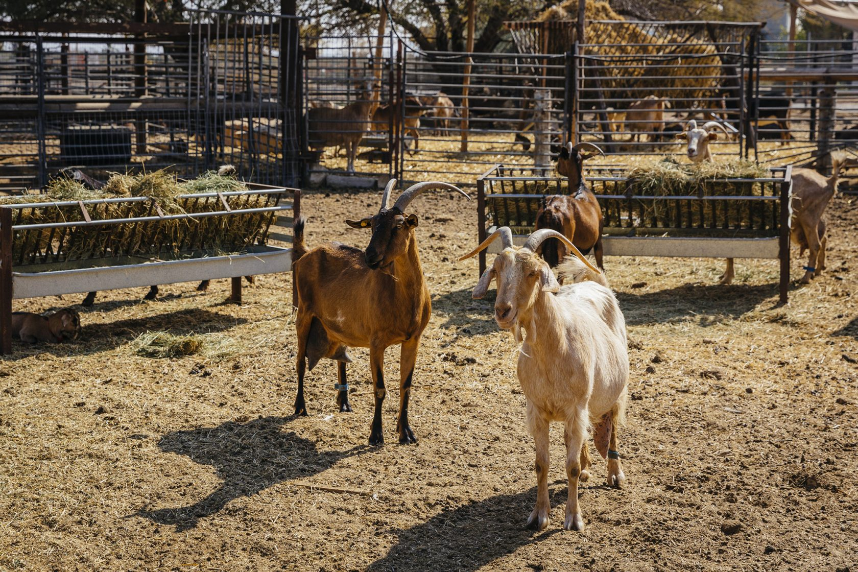 Six Senses Shaharut, Israel – Kibbutz
