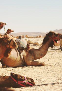 Six Senses Shaharut - Kamel Trekking