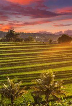 St. Regis Bali Resort - Balis Inland