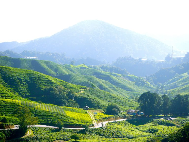 Teeplantage in den Cameron Highlands Malaysia
