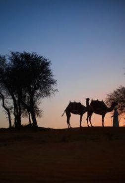 The Ritz-Carlton Al Wadi Desert - Nachtspaziergang