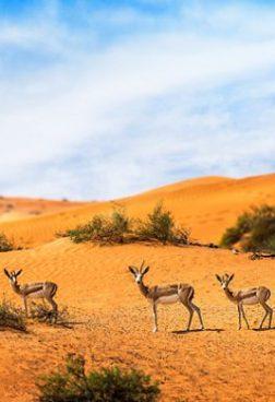 The Ritz-Carlton Al Wadi Desert - Offroad-Bike