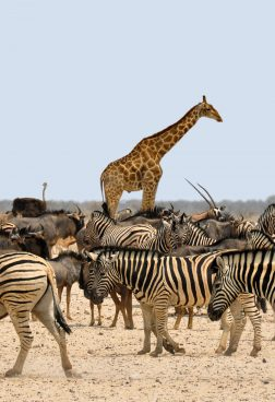 Rundreise Namibia: Tierwelt in Namibia