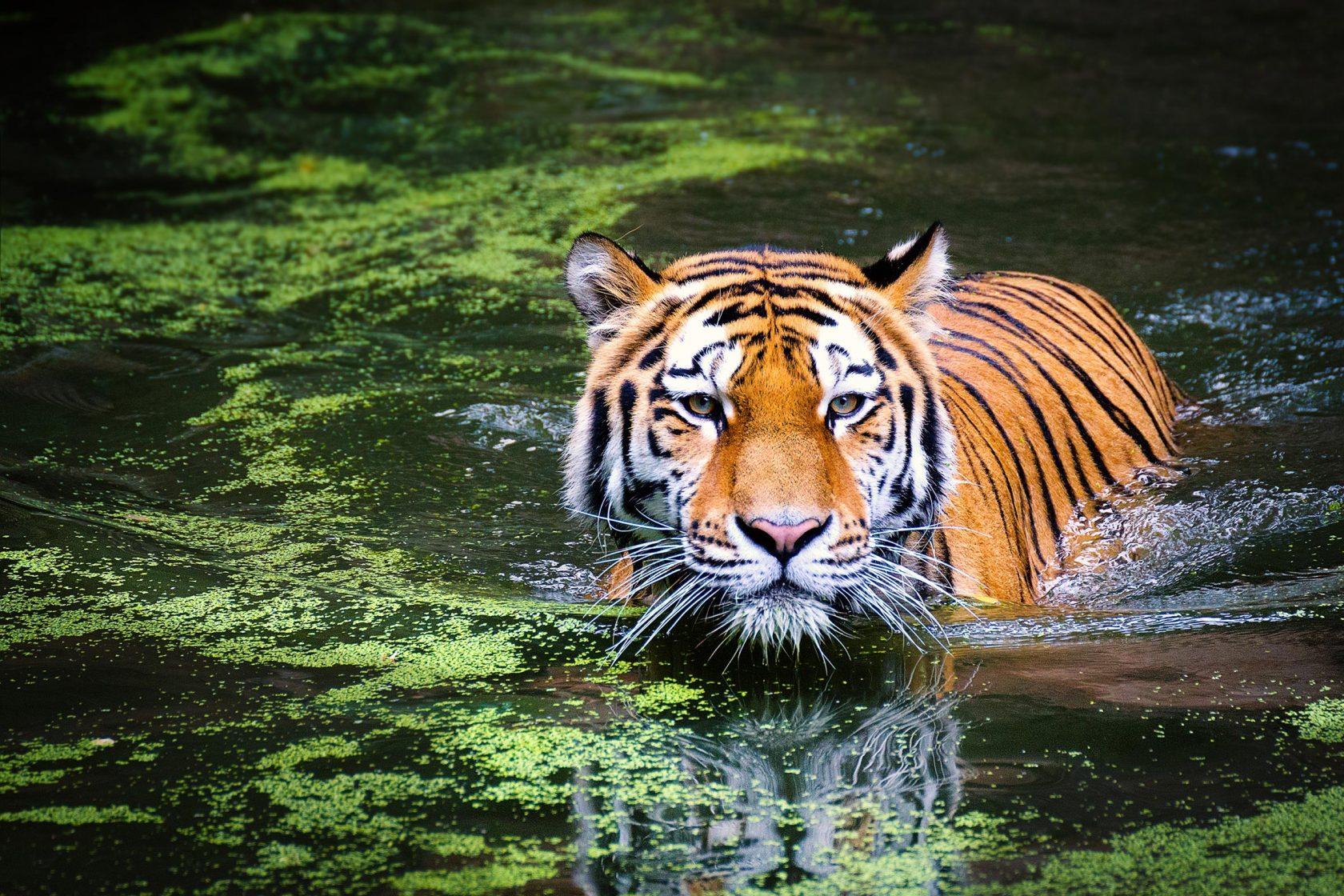 Für die Bucketlist Reisen: Big-Five-Safari in Indonesien – Komodo-Varan, Java-Nashorn, Orang-Utan, Sumatra-Elefant, Sumatra-Tiger