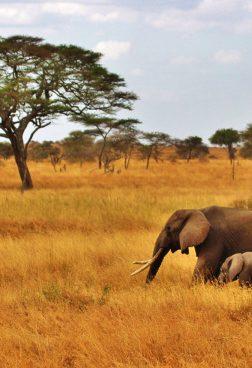 Bucketlist Big-Five-Safari: Tarangire-Nationalpark Tansania/ Afrika