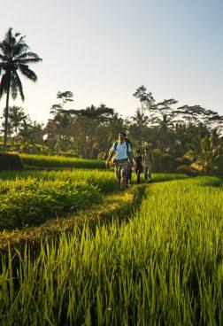 COMO Shambala Estate, Bali – Reisfeldwanderung