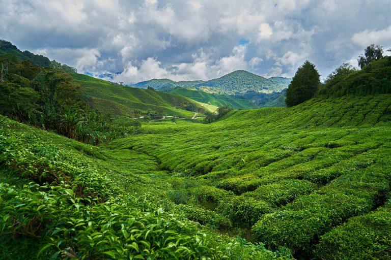 Privatreise, Rundreise Malaysia: Highlands