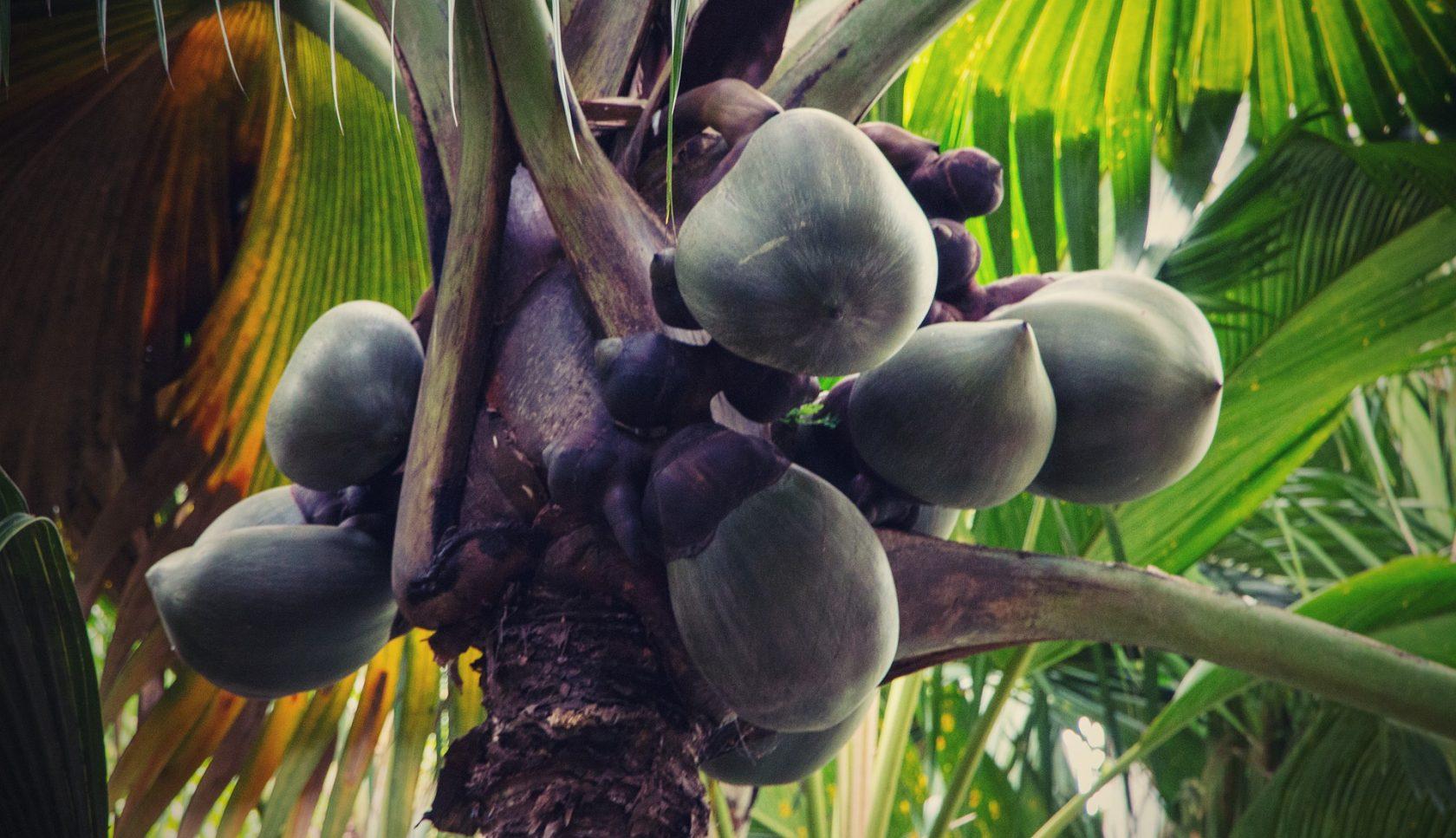 Rundreise Seychellen – Inselhopping Mahé, Praslin, La Digue